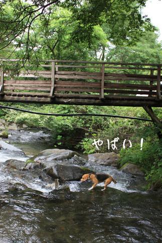 0731ビーチと道志の森10.jpg