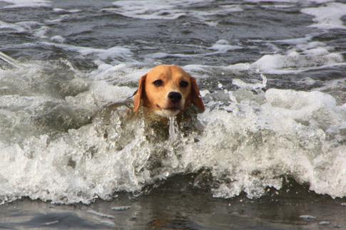 0815海水浴10.jpg