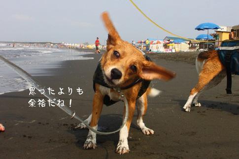 0815海水浴12.jpg