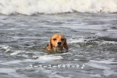 0815海水浴14.jpg
