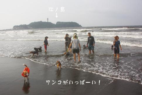 0815海水浴3.jpg