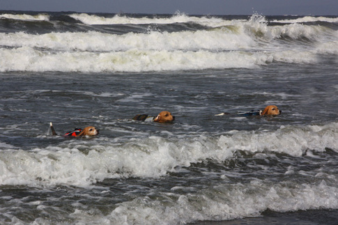 0815海水浴35.jpg