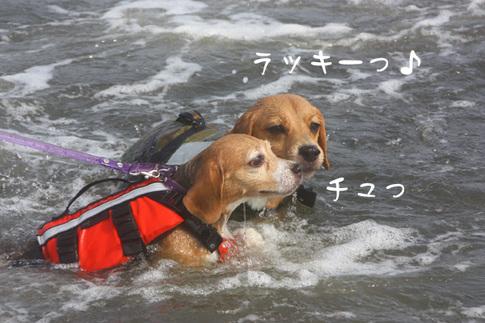 0815海水浴37.jpg