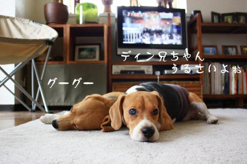 0820夢の多頭飼い5.jpg