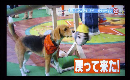 200110709志村どうぶつ園31.jpg