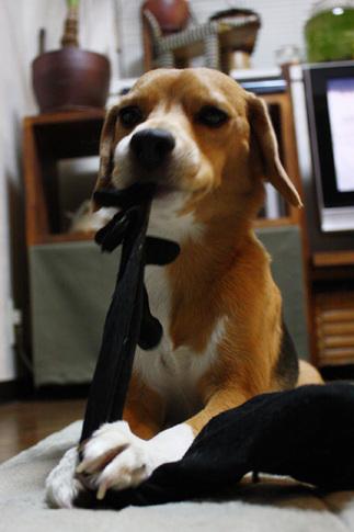 20110118パパの靴下9.jpg