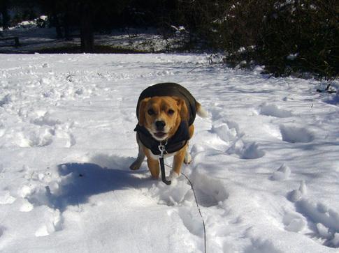 20110215雪3.jpg