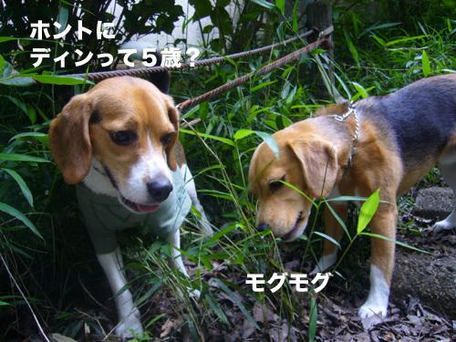 20110607くらちゃん10.jpg