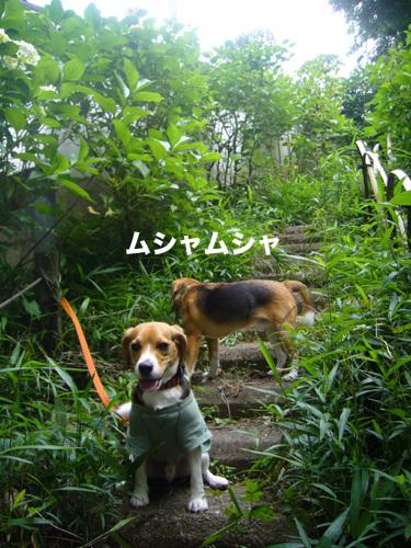 20110607くらちゃん8.jpg