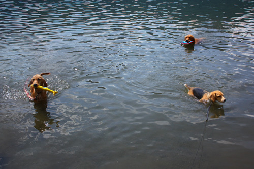 20110806西湖ソロキャンプ36.jpg