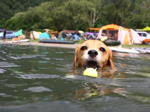 20110812お盆西湖キャンプ44.jpg