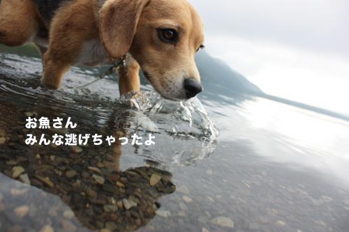 20110827本栖湖キャンプ44.jpg