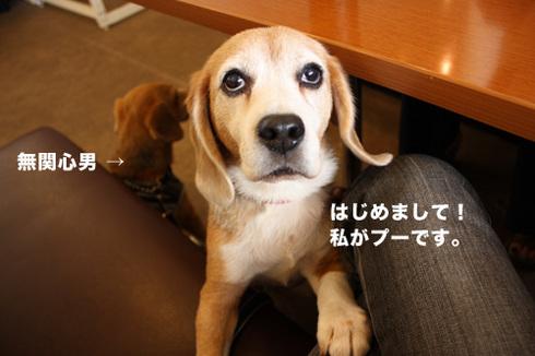20110912プーちゃん2.jpg