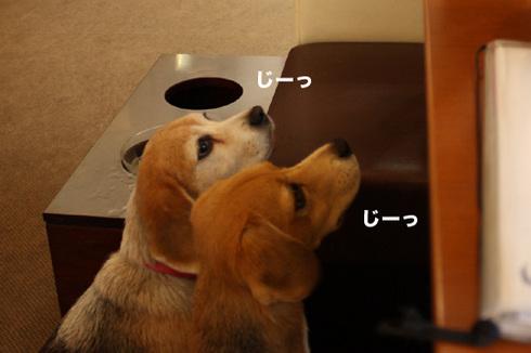 20110912プーちゃん3.jpg