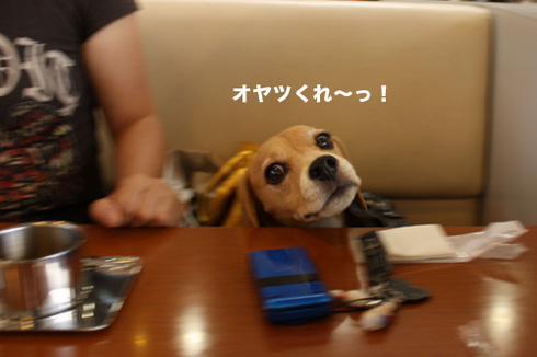 20110912プーちゃん7.jpg