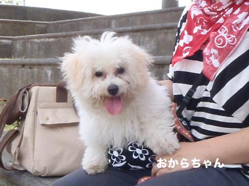20110916うちのわんこ撮影4.jpg