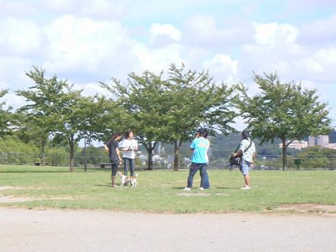 20110916うちのわんこ撮影5.jpg