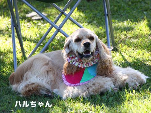 20110918朝霧オフ会25.jpg