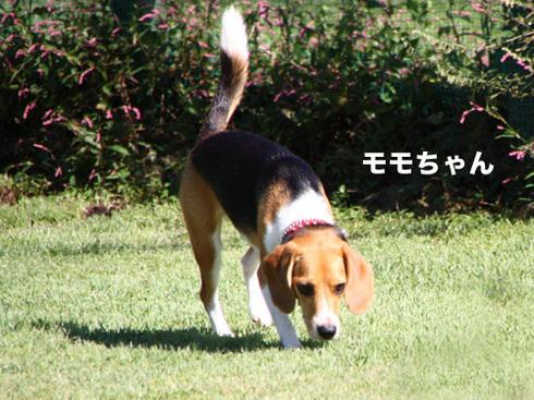 20110918朝霧オフ会26.jpg