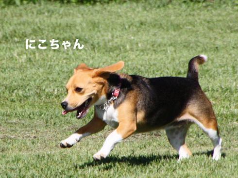 20110918朝霧オフ会36.jpg
