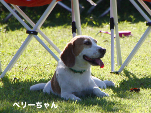 20110918朝霧オフ会39.jpg