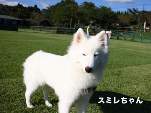 20110918朝霧オフ会40.jpg