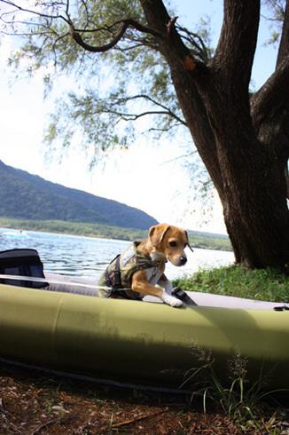 20110923西湖水没キャンプ23.jpg