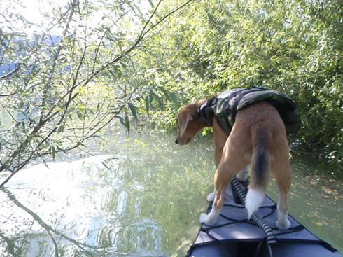 20110923西湖水没キャンプ38.jpg