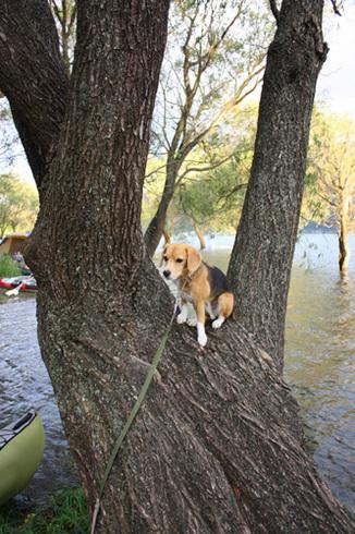 20110923西湖水没キャンプ53.jpg