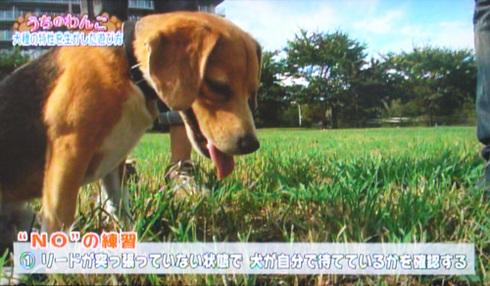 20111001うちのわんこ11.jpg