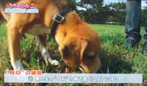 20111001うちのわんこ12.jpg
