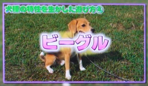 20111001うちのわんこ4.jpg