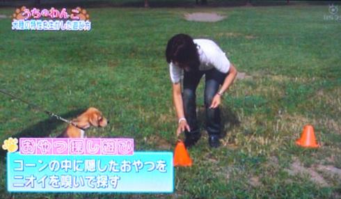 20111001うちのわんこ9.jpg