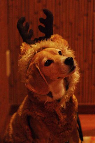 20111203クリスマス旅行26.jpg