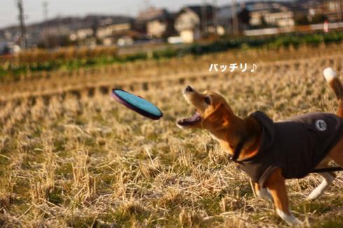 20120102パパ実家11.jpg