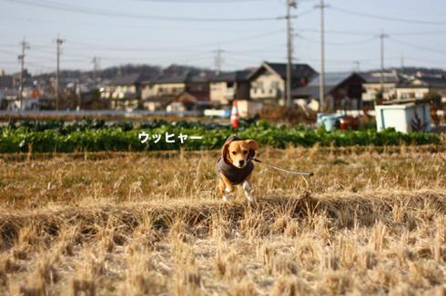 20120102パパ実家8.jpg