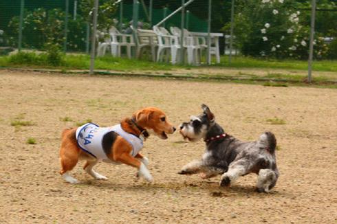 20120714犬山ラン4.jpg