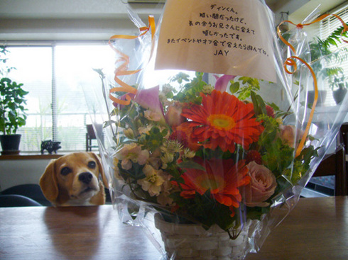 JAYくんからお花.jpg