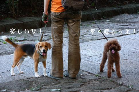 0718ハルと散歩6.jpg