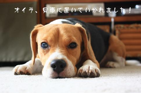 0820夢の多頭飼い3.jpg