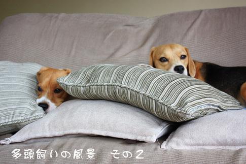 0820夢の多頭飼い7.jpg