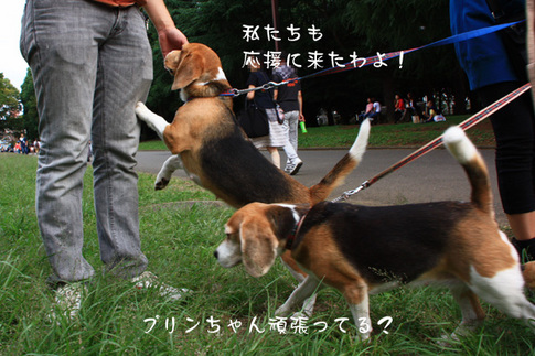 1003代々木公園27.jpg