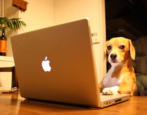20110104PC犬.jpg