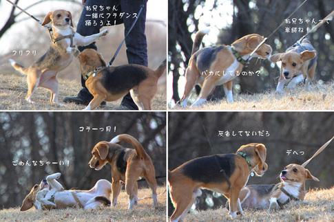 20110109月ちゃん12.jpg