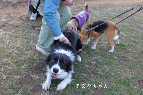 20110109月ちゃん20.jpg