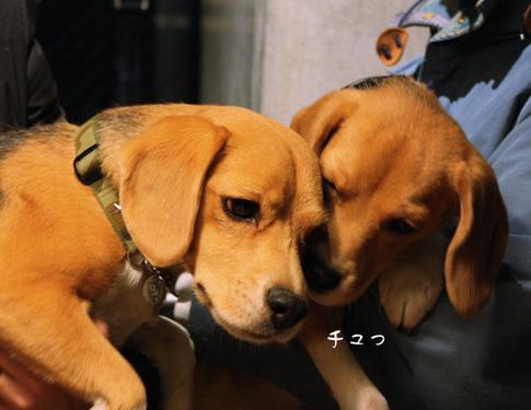 20110109月ちゃん24.jpg