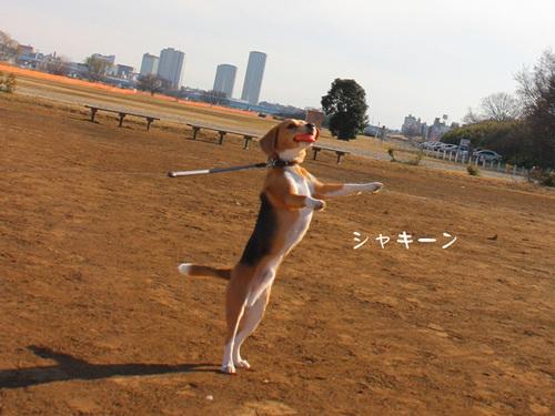 20110110どろんこ3.jpg