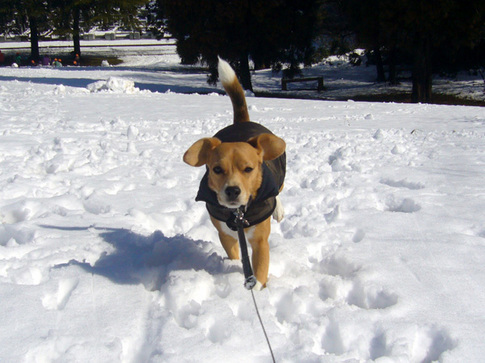 20110215雪4.jpg