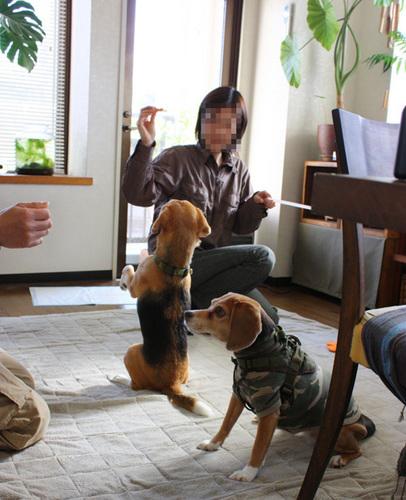 20110327くっきーちゃん3.jpg