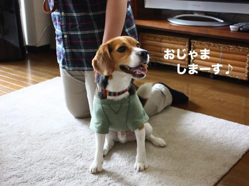 20110607くらちゃん1.jpg